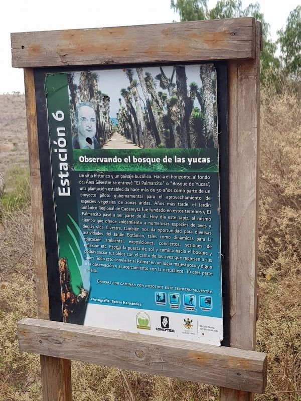 Observing the Yucca Forest Marker image. Click for full size.