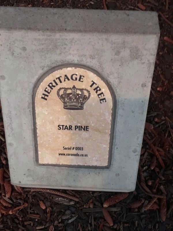 Coronado Heritage Tree plaque is next to the Coronado Rotary Club Christmas Tree Marker. image. Click for full size.