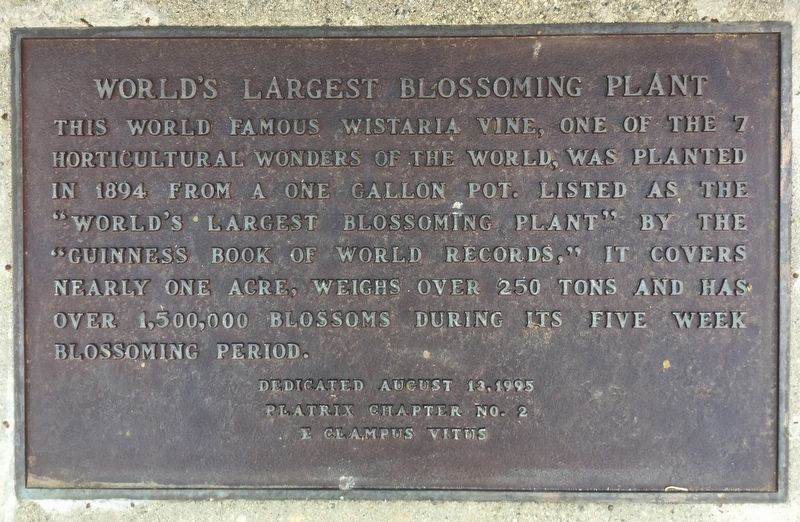World's Largest Blossoming Plant Marker image. Click for full size.