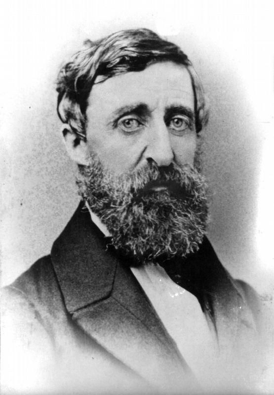 Henry David Thoreau image. Click for full size.