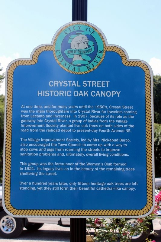 Crystal Street Historic Oak Canopy Marker image. Click for full size.