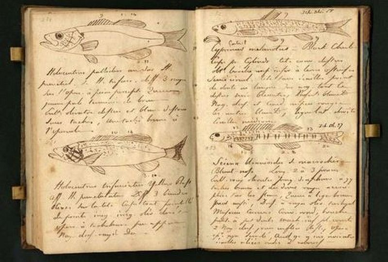 Drawings from the Journals of Lewis and Clark image. Click for full size.