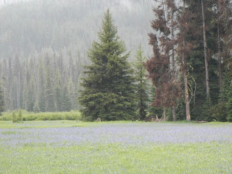 Packer Meadows with camas fields image. Click for full size.