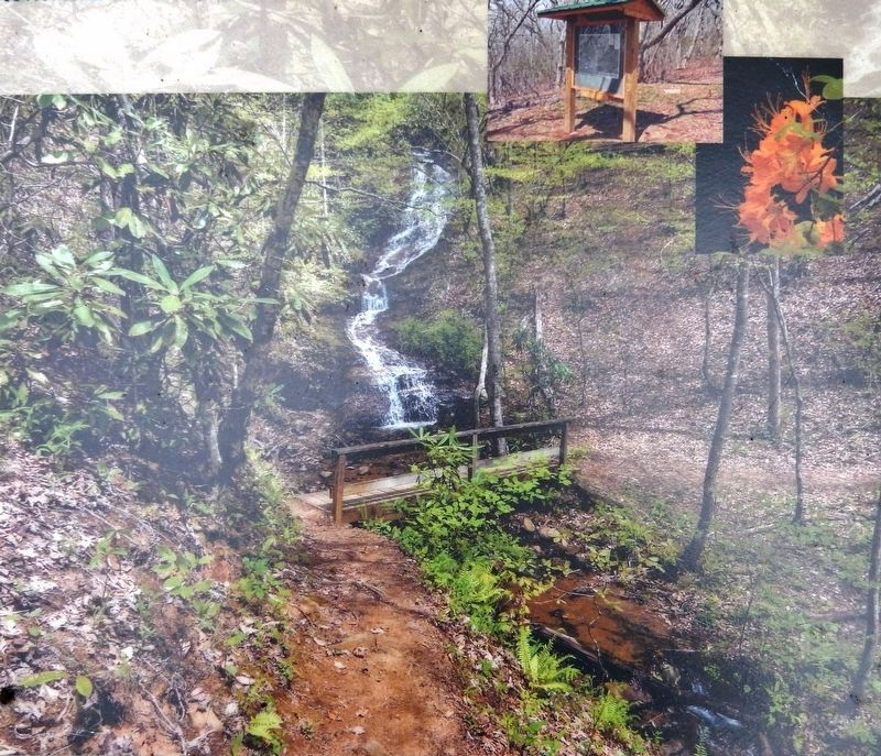 Marker detail: Images from the Bartram trail image. Click for full size.