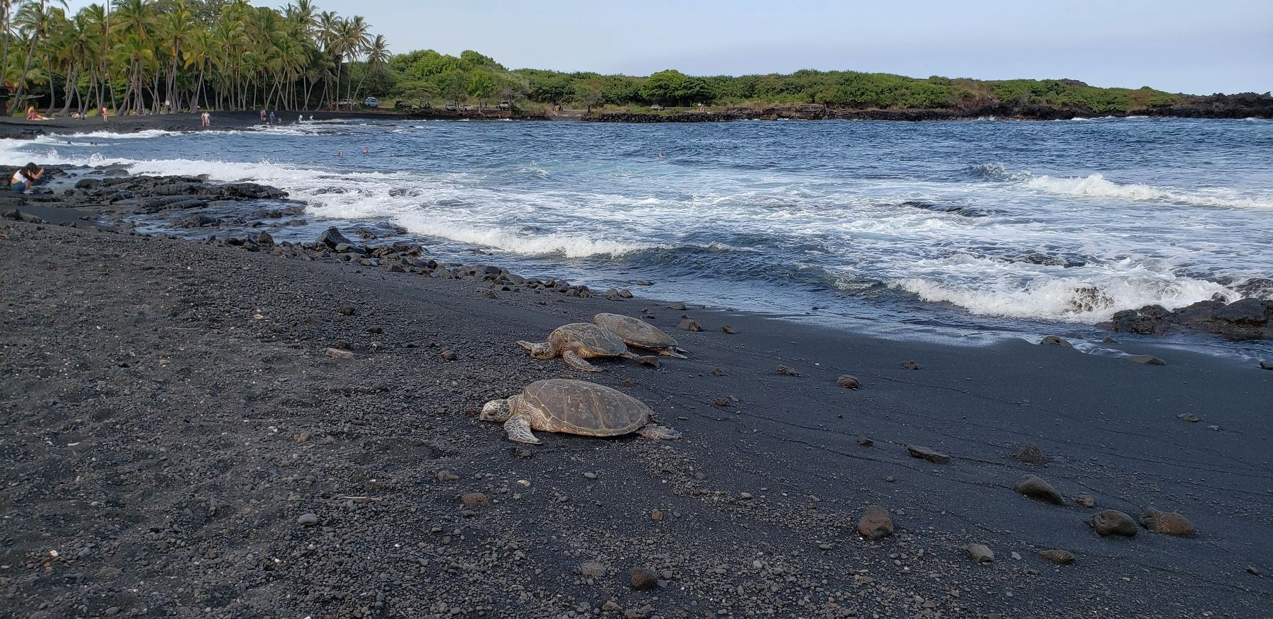 Turtles on Punalu'u Black Sand Beach (<i>view from near marker</i>) image. Click for full size.