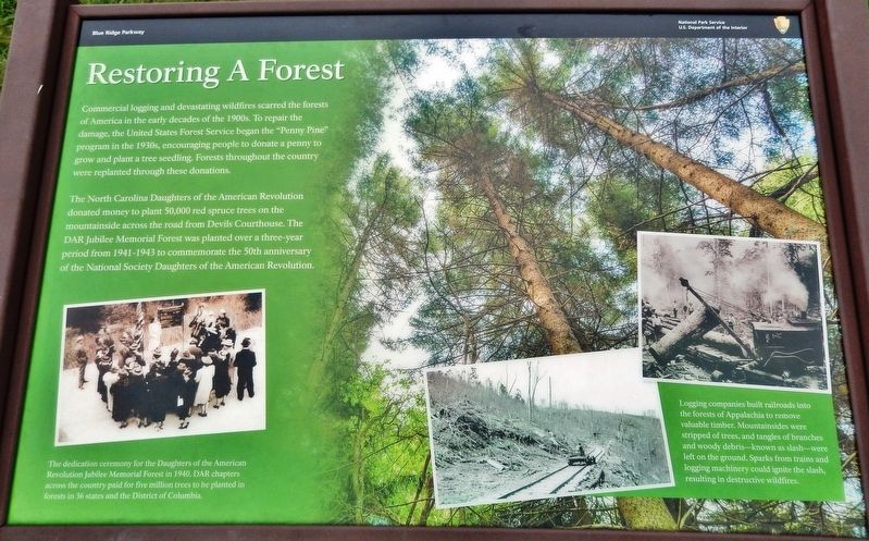 Restoring A Forest Marker image. Click for full size.