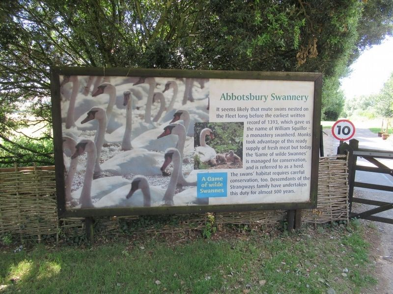 Abbotsbury Swannery Marker image. Click for full size.