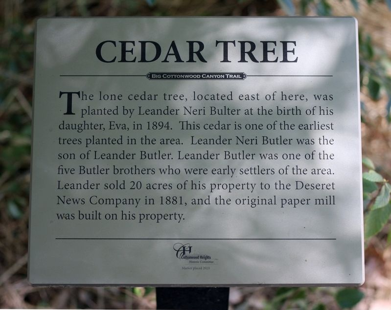 Cedar Tree Marker image. Click for full size.