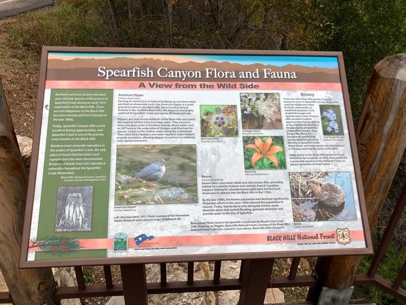Spearfish Canyon Flora and Fauna Marker image. Click for full size.