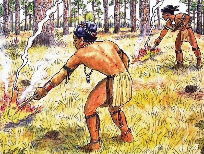 Marker detail: Apalachee Indians practicing slash and burn agriculture image. Click for full size.
