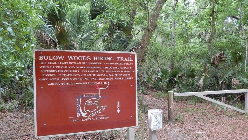 Bulow Woods Hiking Trail (<i>4/10 mile east of marker</i>) image. Click for full size.