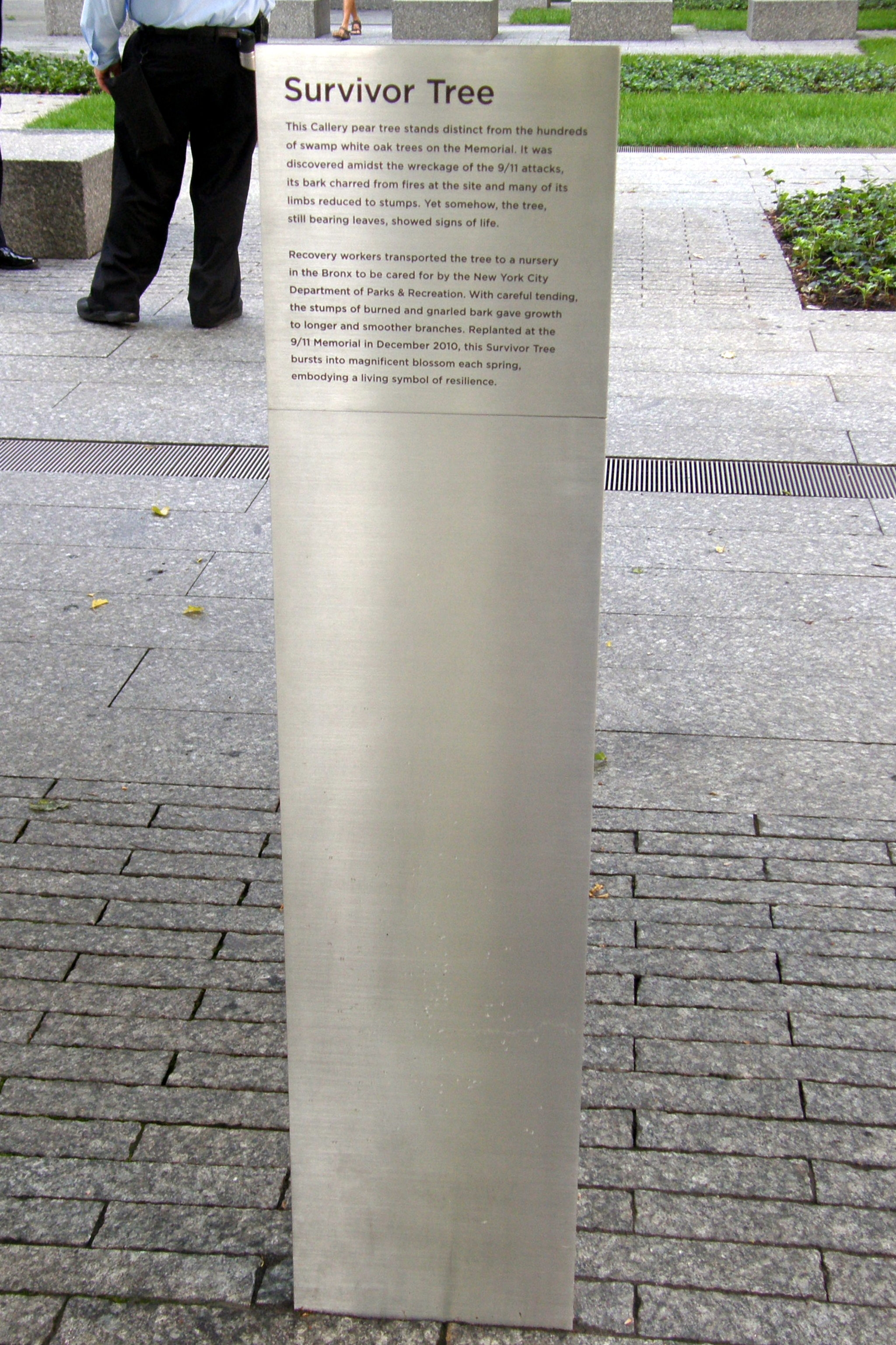 Survivor Tree Marker