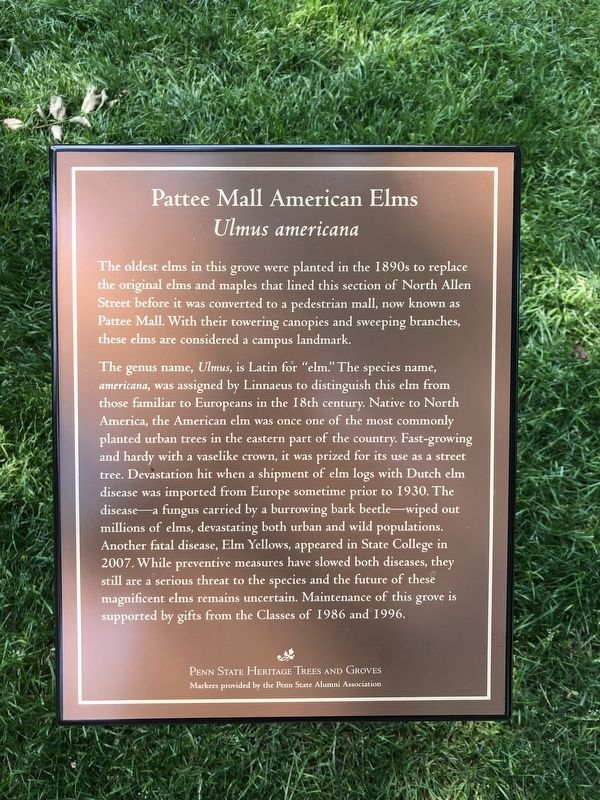 Pattee Mall American Elms Marker image. Click for full size.