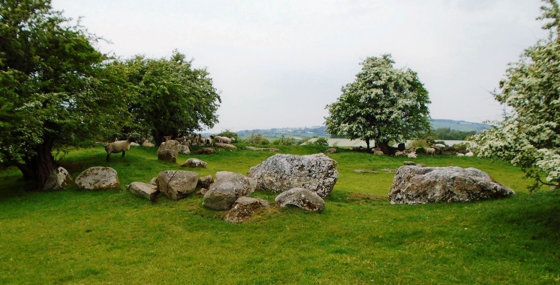 Ciorcal Cloch le Claífort Chaisleán an Ridire / Castleruddery Embanked Stone Circle image. Click for full size.