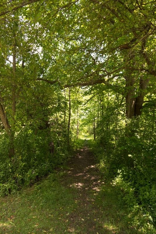 View of the Interurban Trail Near Marker image. Click for full size.
