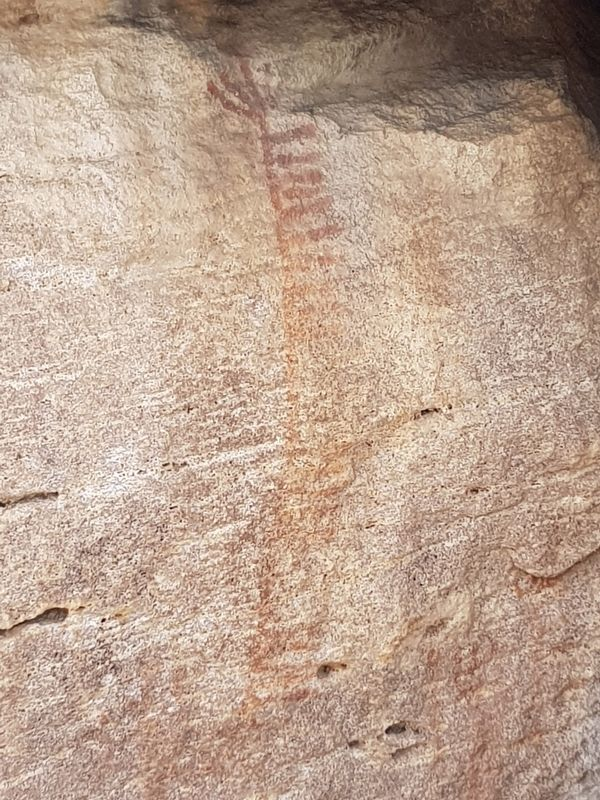 Nearby rock art, possibly depicting an agave flower image. Click for full size.