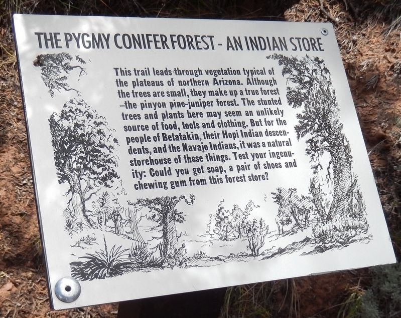 The Pygmy Conifer Forest - An Indian Store Marker image. Click for full size.