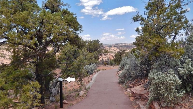 Pinyon Pine Marker • <i>wide view<br>(marker visible on left/north side of Sandal Trail)</i> image. Click for full size.