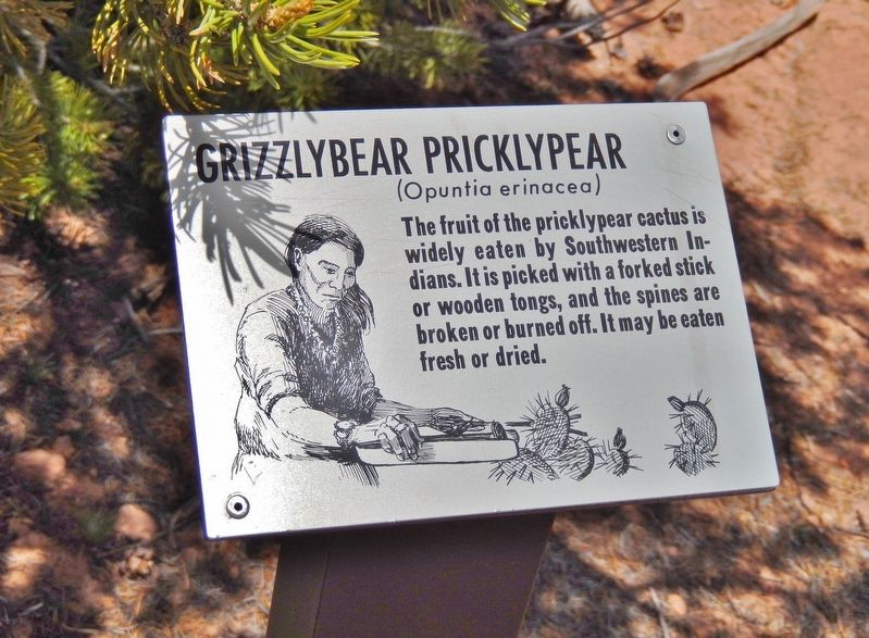Grizzlybear Pricklypear Marker (<i>wide view</i>) image. Click for full size.