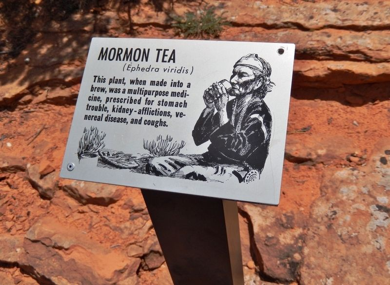Mormon Tea Marker (<i>wide view</i>) image. Click for full size.