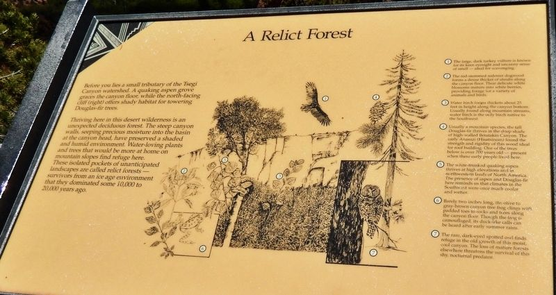 A Relict Forest Marker image. Click for full size.