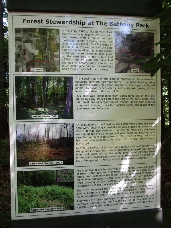 Forest Stewardship at The Bethany Park Marker image. Click for full size.
