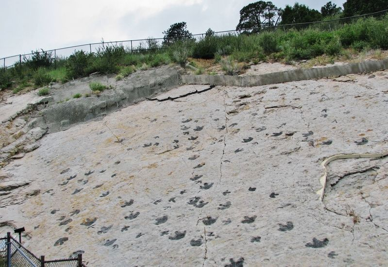 Dinosaur Footprints image. Click for full size.