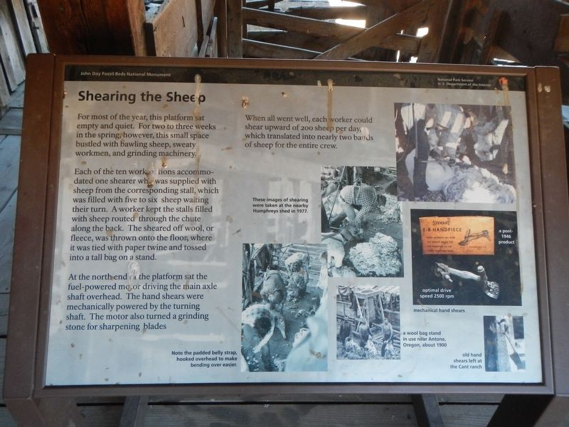 Shearing the Sheep Marker image. Click for full size.