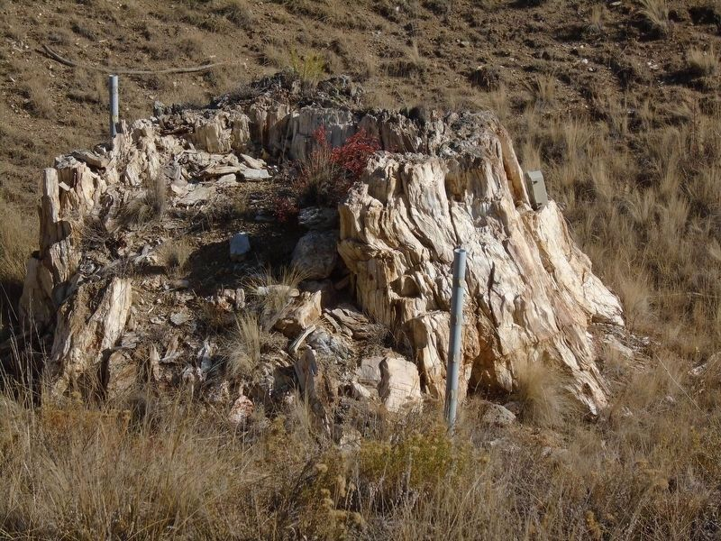 Nearby Petrified Stump north of Visitor Center image. Click for full size.