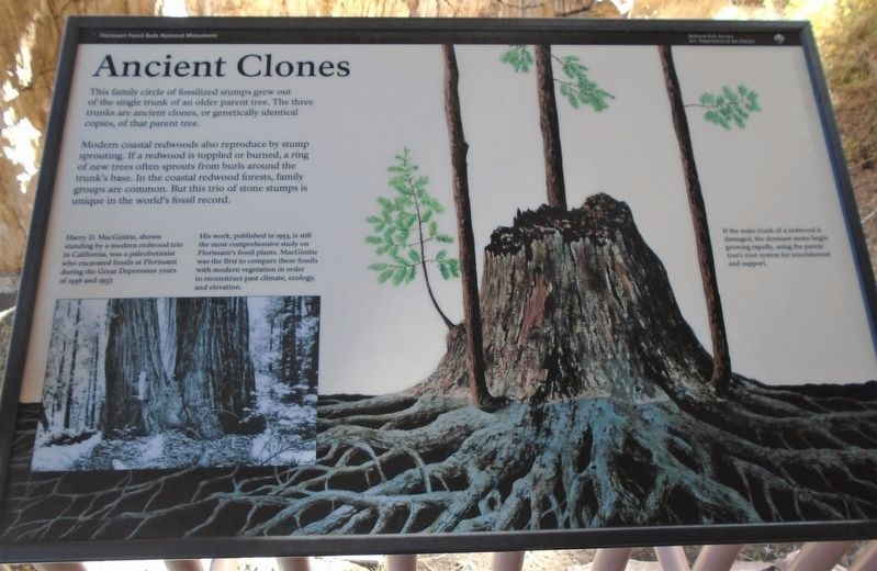 Ancient Clones Marker image. Click for full size.