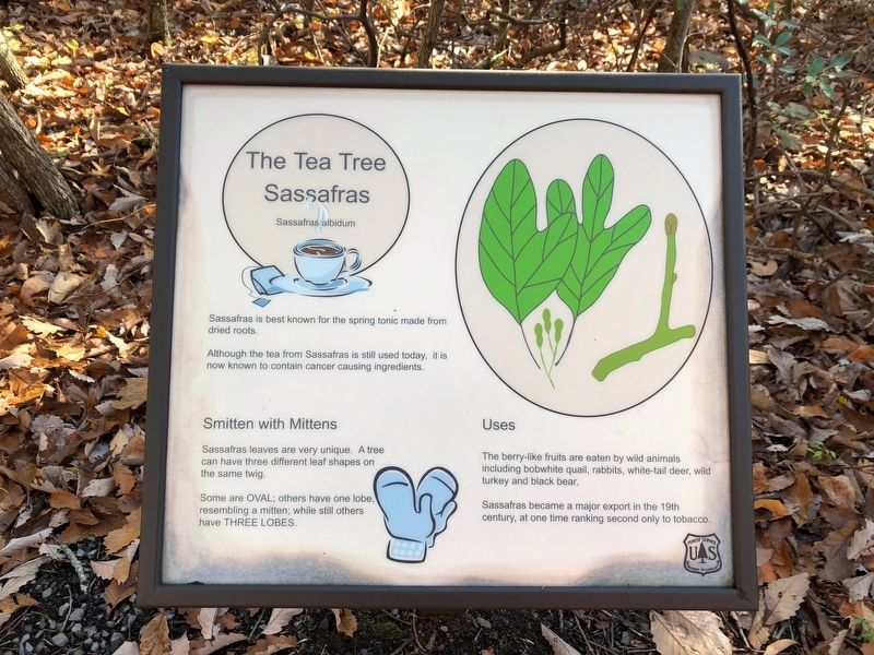 The Tea Tree Marker image. Click for full size.