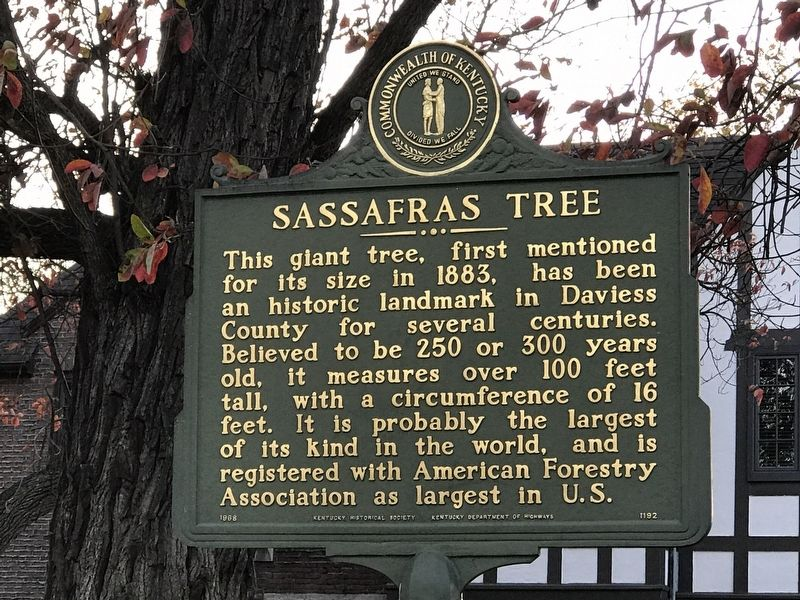 Sassafras Tree Marker image. Click for full size.