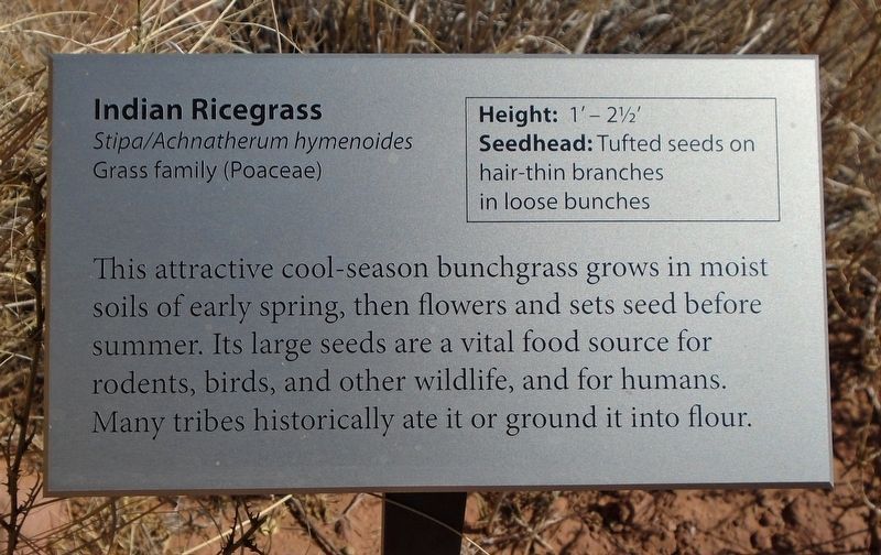 Indian Ricegrass Marker image. Click for full size.