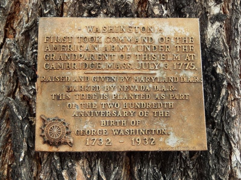 Washington Elm Marker image. Click for full size.