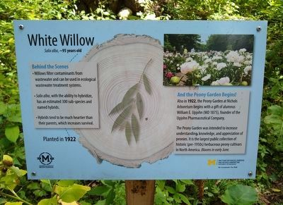 White Willow Marker image. Click for full size.